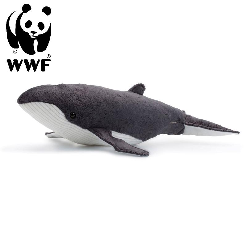 Knölval - WWF (Världsnaturfonden)