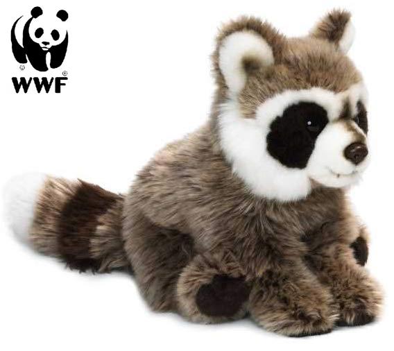Tvättbjörn - WWF